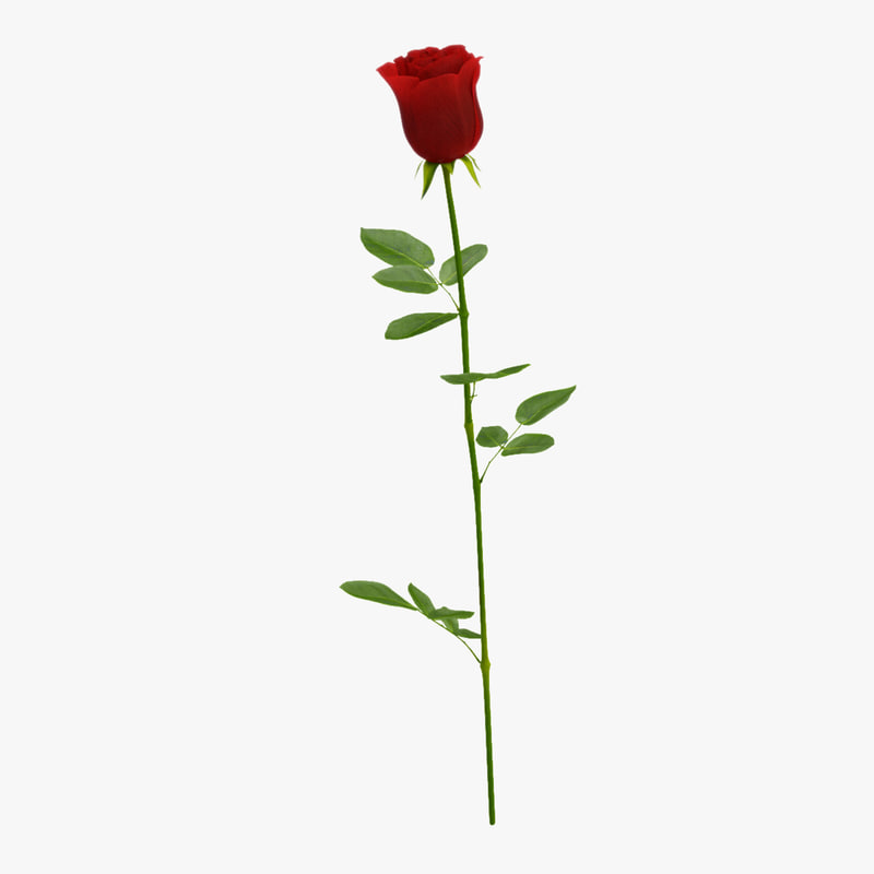 rose leaf 3d max