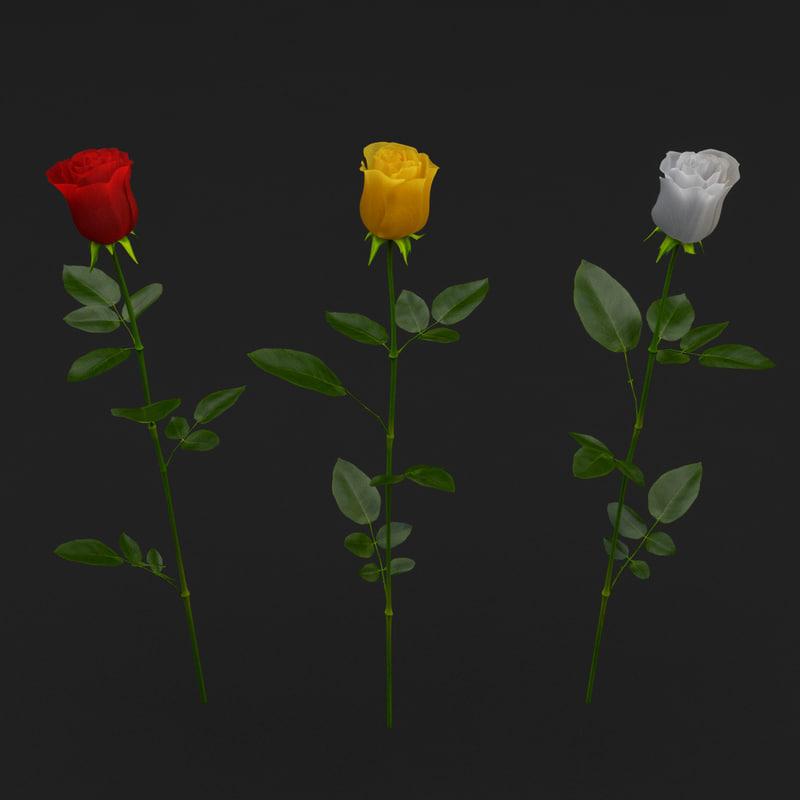 3d model of rose set