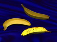 bananas realistic 3d model