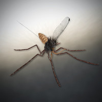 mosquito 3d blend