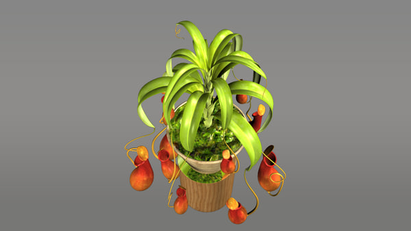 3d model nepenthes tropical pitcher