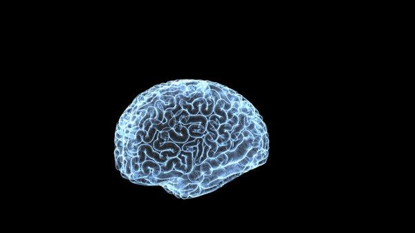 3d human brain x-ray model
