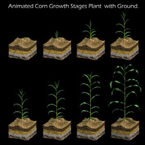 corn growth 3d model