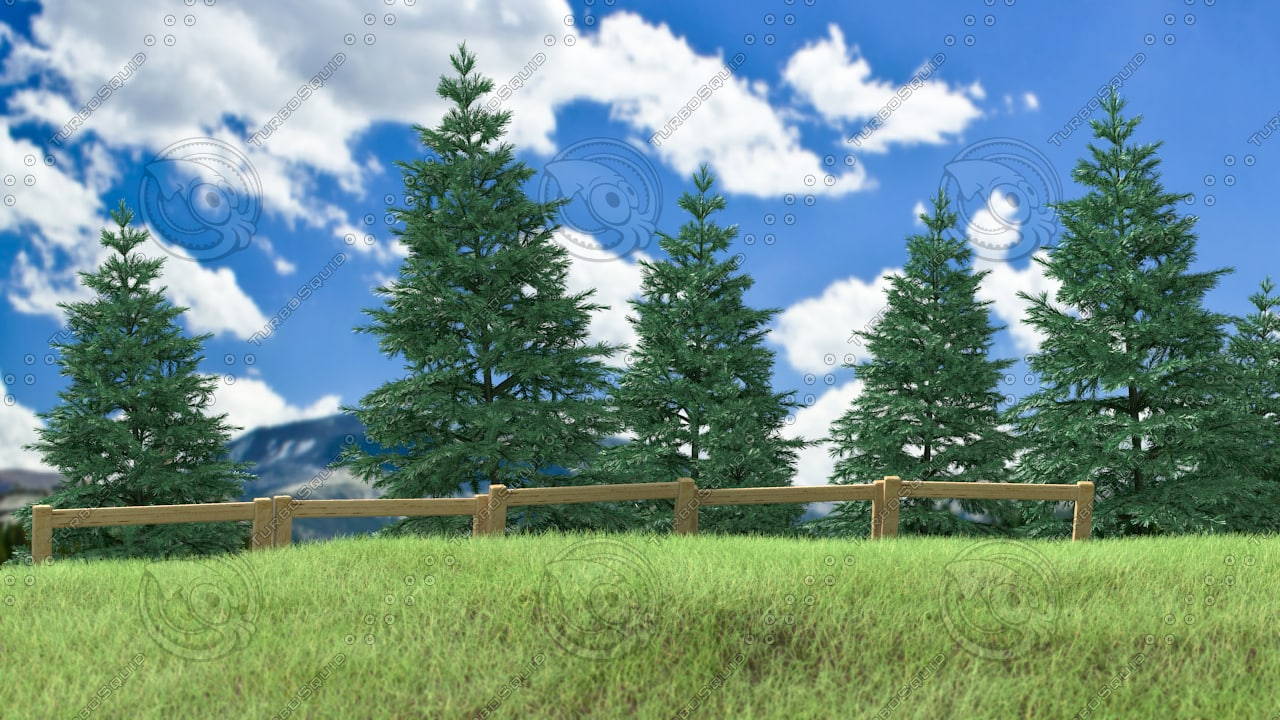 pine tree forest - 3d obj