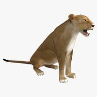 3d lioness pose 4 model