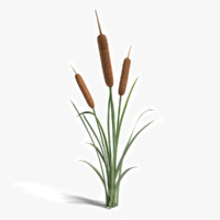cattail plant 3ds