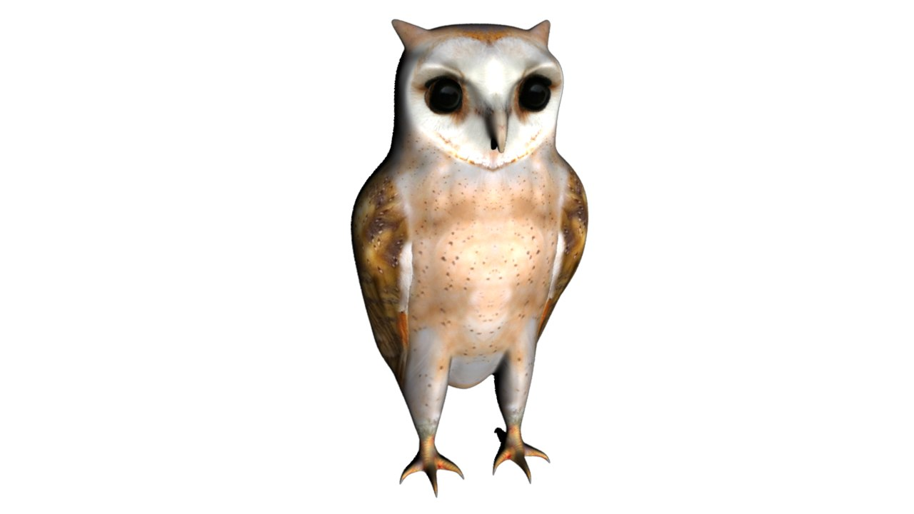 owls birds 3d obj