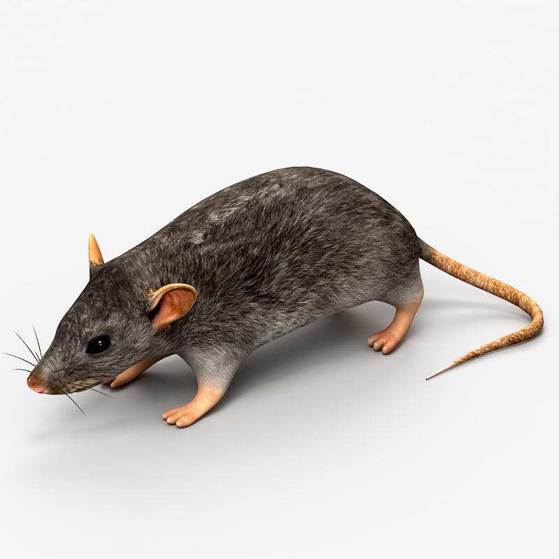 3d model rat mouse