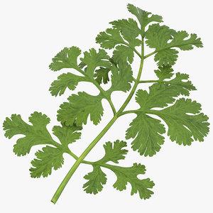 max cilantro