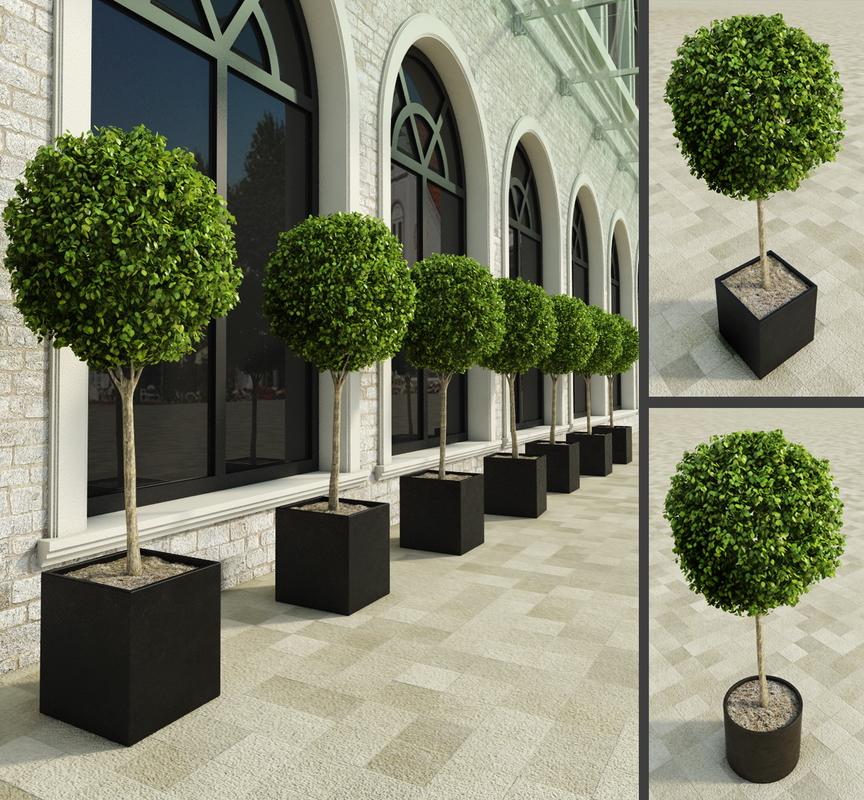 3d outdoor plants boxwood trees model