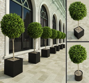 3d outdoor plants boxwood trees model
