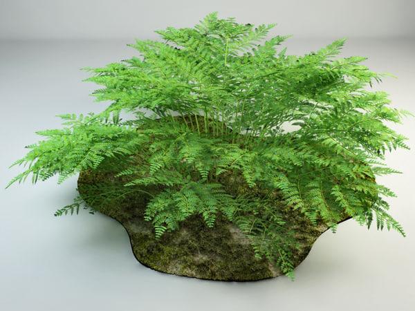 bracken bush 3d max