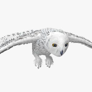 3d model snowy owl pose 1