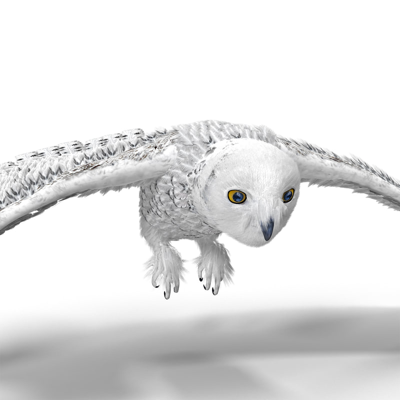 3d model snowy owl pose 1