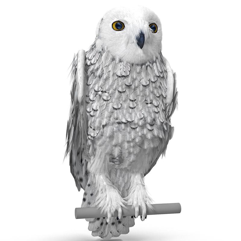 3dsmax snowy owl pose 2