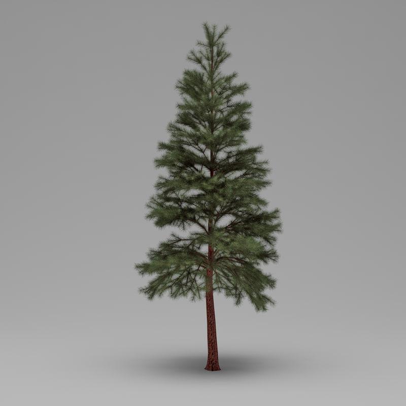 3d model conifer 011