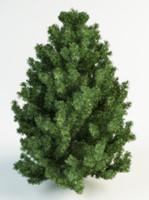 3d model black pine