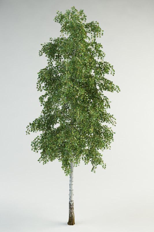 realistic birch 3d max
