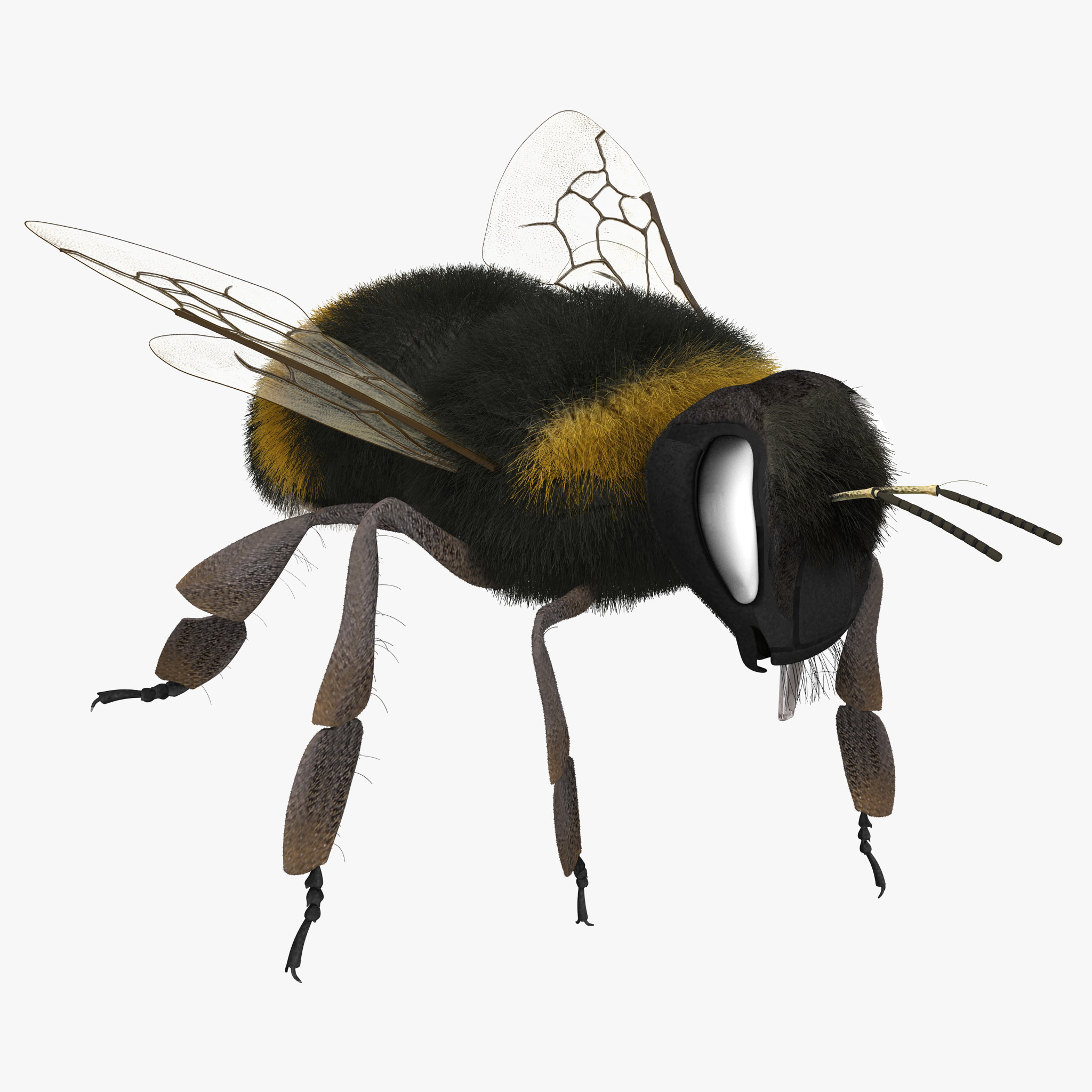 bumble bee rigged max