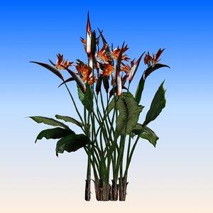 max bird paradise flower