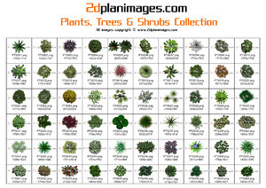 2d Floorplan Plants, Trees & Shrubs Collection Overhead & topdown views (2)