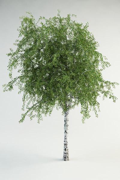 3d realistic birch