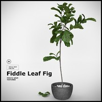 plant fiddle leaf fig 3d max