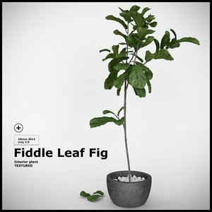 plant fiddle leaf fig 3d max