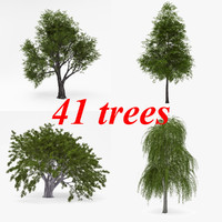 3d deciduous v-ray tree model