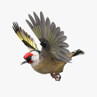 3d max european gold finch