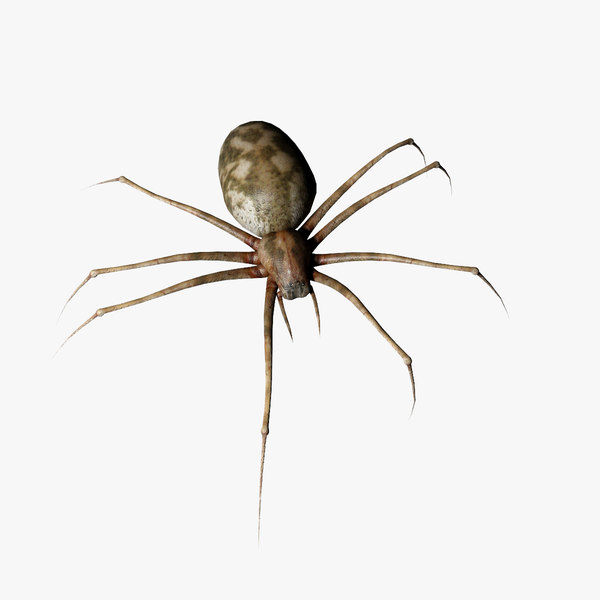 3d realistic spider model