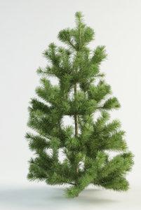 3d model of scots pine 1