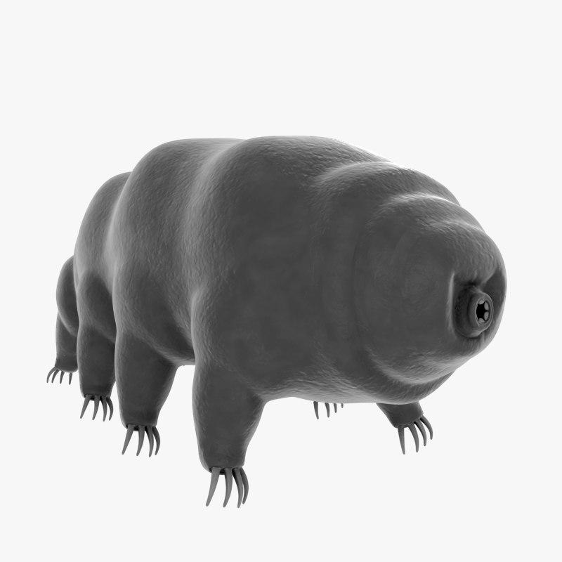 tardigrade water bear 3d model