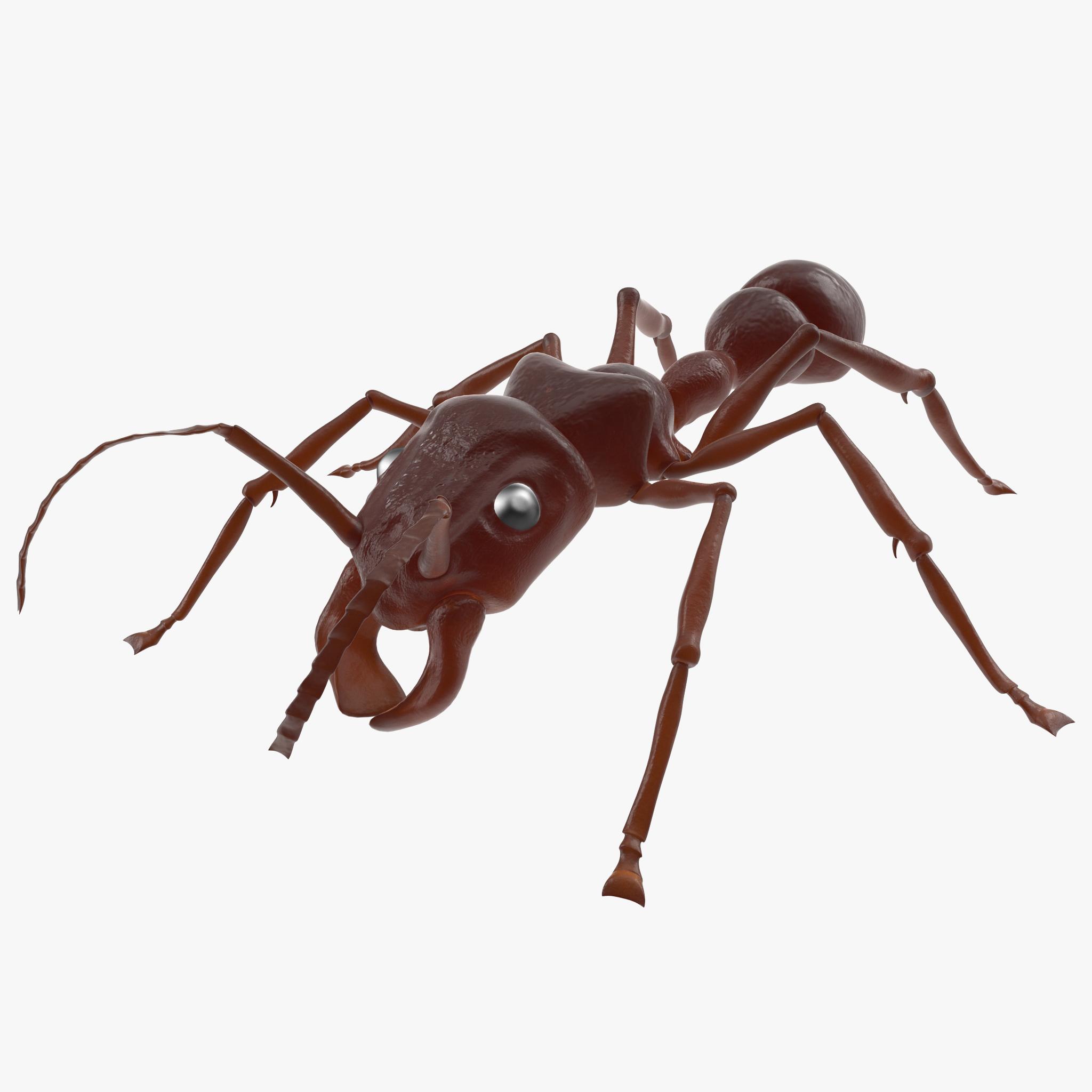 3d model bullet ant