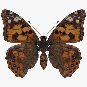 west coast lady butterfly obj