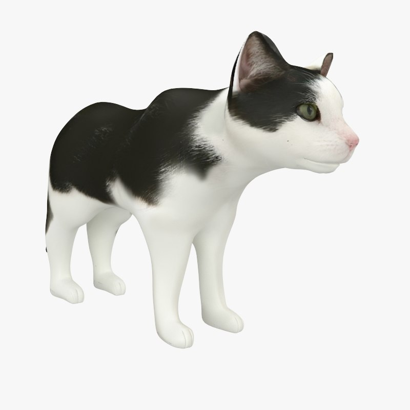 max cats feline kitty