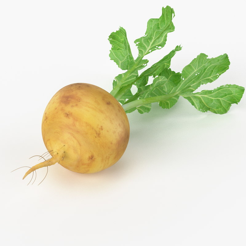 3d model realistic turnip real