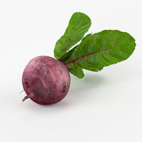 realistic beetroot real vegetables 3d model