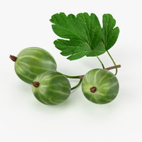 realistic gooseberry real max
