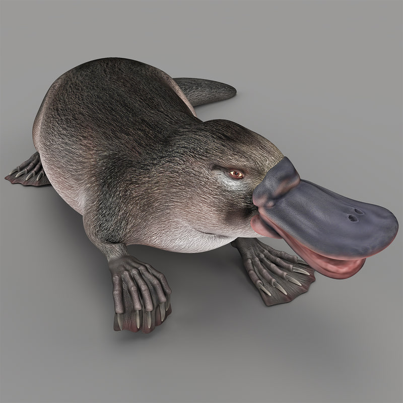 3d platypus rigged