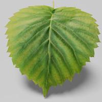 tree leaf landscape 3d max