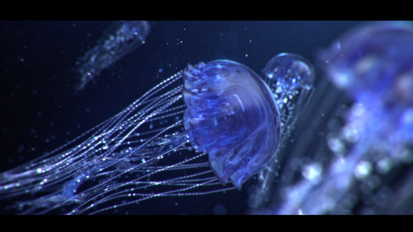 max object jellyfish animate