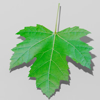 sycamore maple leaf trees 3d max