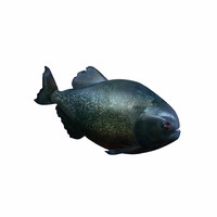 piranha fish shark 3d obj
