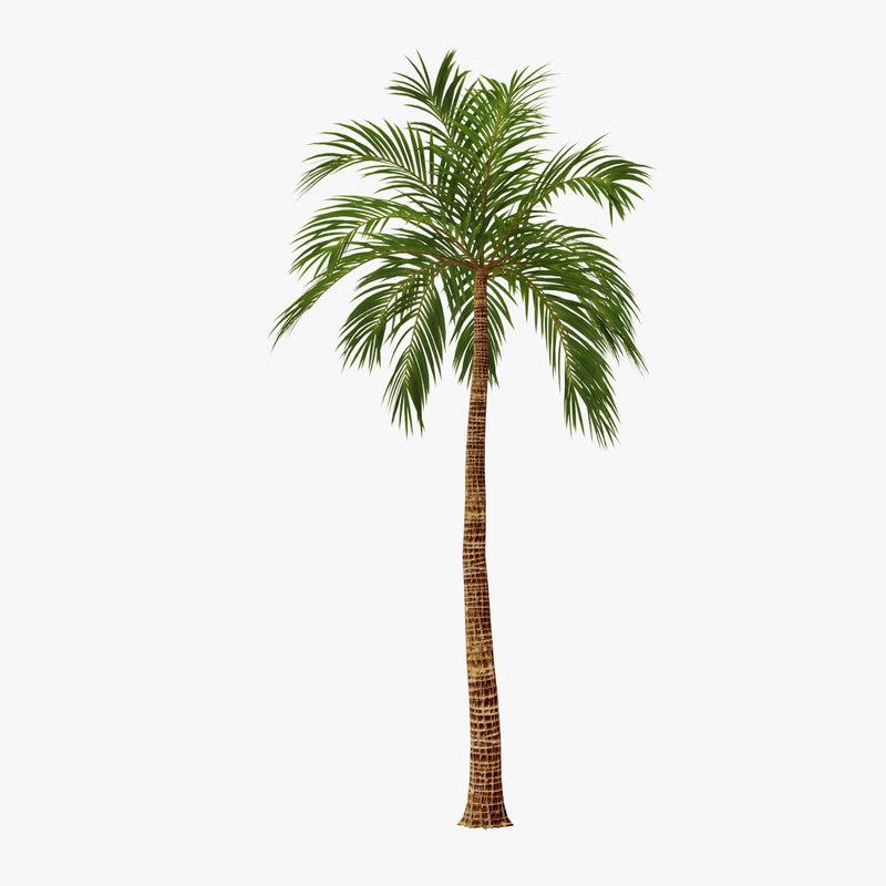 3d palm 02 model