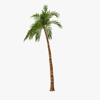 3ds palm 01