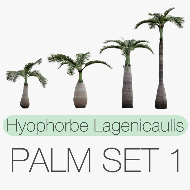 set hyophorbe lagenicaulis obj