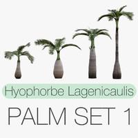 Hyophorbe Lagenicaulis Set