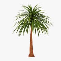 palm 04 3d model