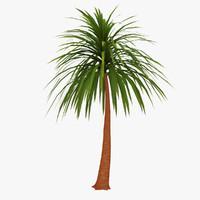 palm 05 max